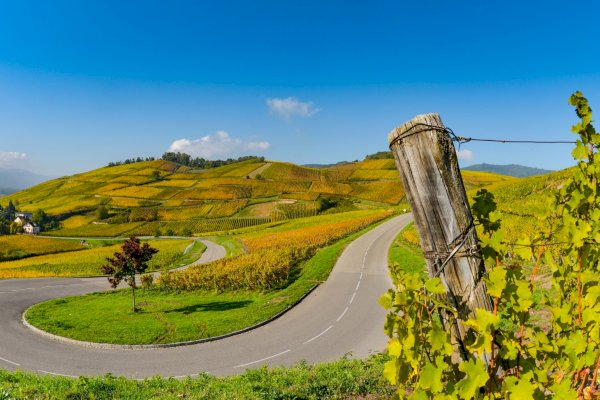 Ophorus Tours - 8 Days Alsace & Burgundy Small Group Private Travel Package - 4* Hotel Option