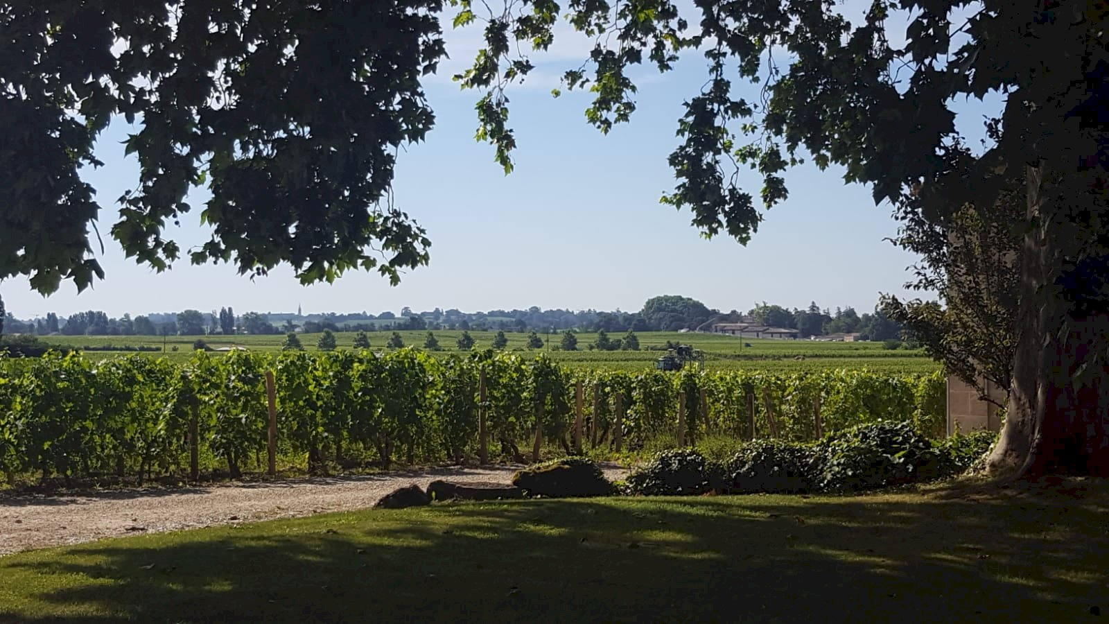 Ophorus Tours - Graves & Sauternes Wine Tour Small Group Private Full Day Trip from Saint Emilion