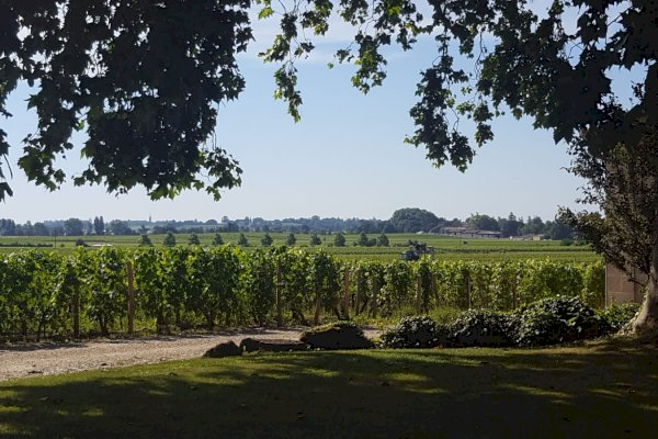 Ophorus Tours - Graves and Sauternes Wine Tour Small Group Private Full Day Trip from Saint Emilion