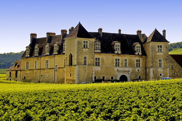 Ophorus Tours - Day tour in Burgundy with 10 wines tasting at local wineries