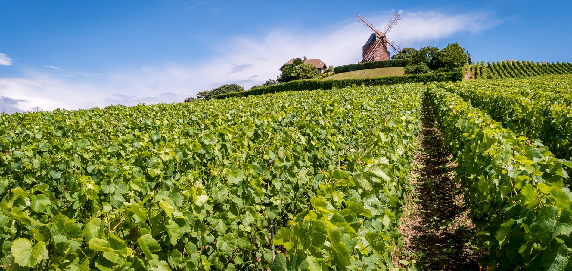 Ophorus Tours - Champagne Day Tour with Tasting: Veuve Clicquot, local wineries, lunch included