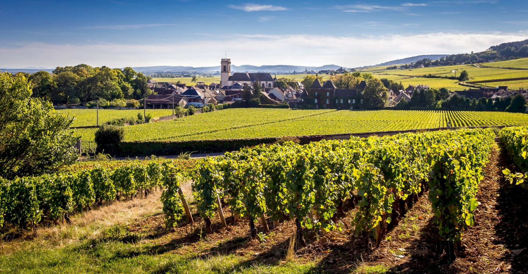 Ophorus Tours - Côte de Beaune Burgundy Wine Tour Private Day Trip From Dijon