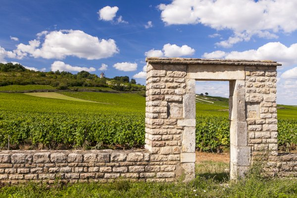 Ophorus Tours - Côte De Nuits Burgundy Wine Tour Private Day Trip From Beaune for 2 persons