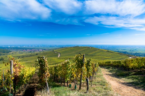 Ophorus Tours - Alsace Grands Crus Wine Tour Private Day Trip From Riquewihr for 2 persons