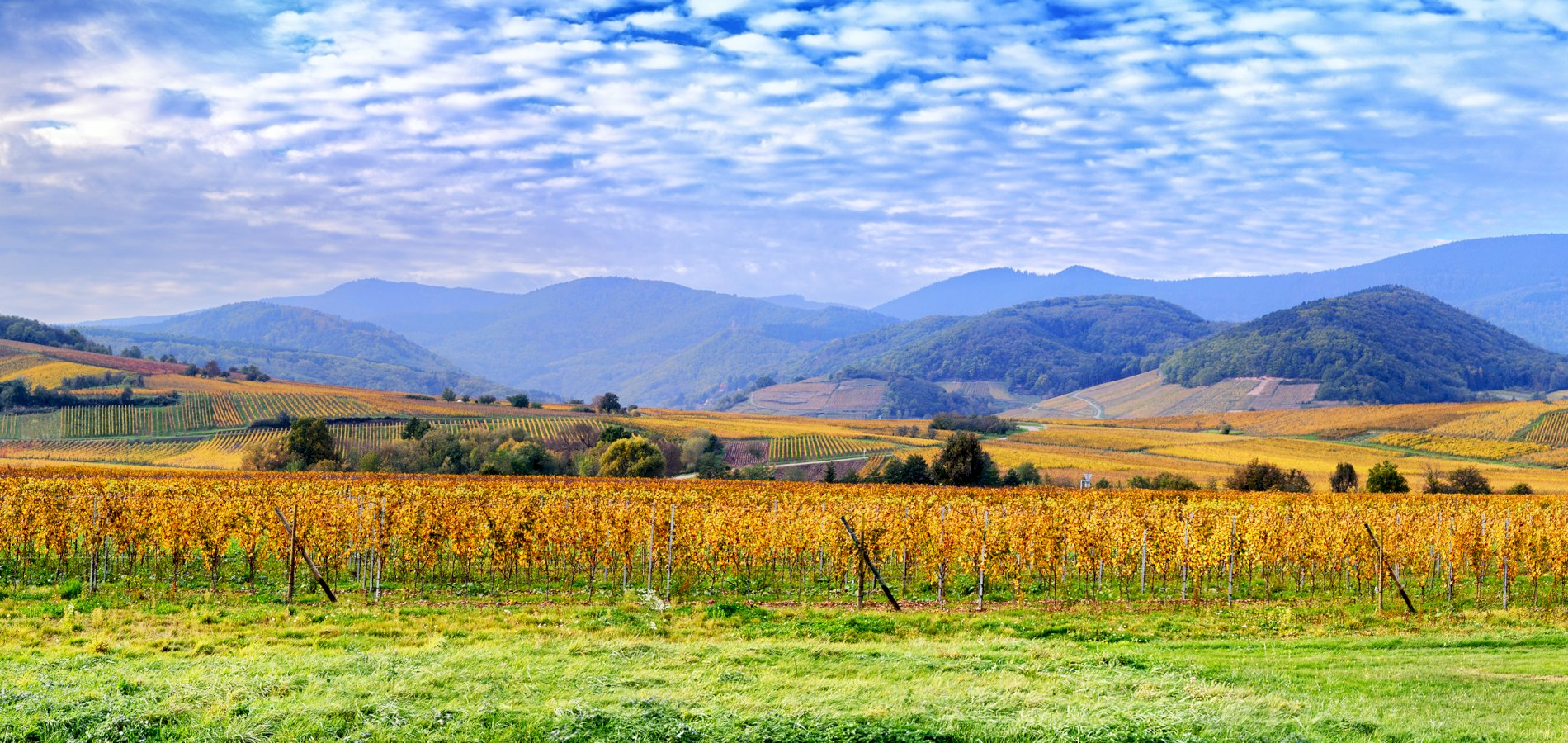 Ophorus Tours - Alsace Grands Crus Wine Tour Private Day Trip From Mulhouse for 2 persons