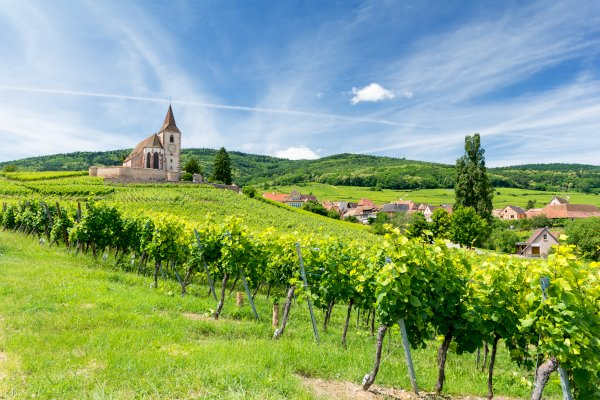 Ophorus Tours - Pearls of Alsace Private Day Trip From Mulhouse