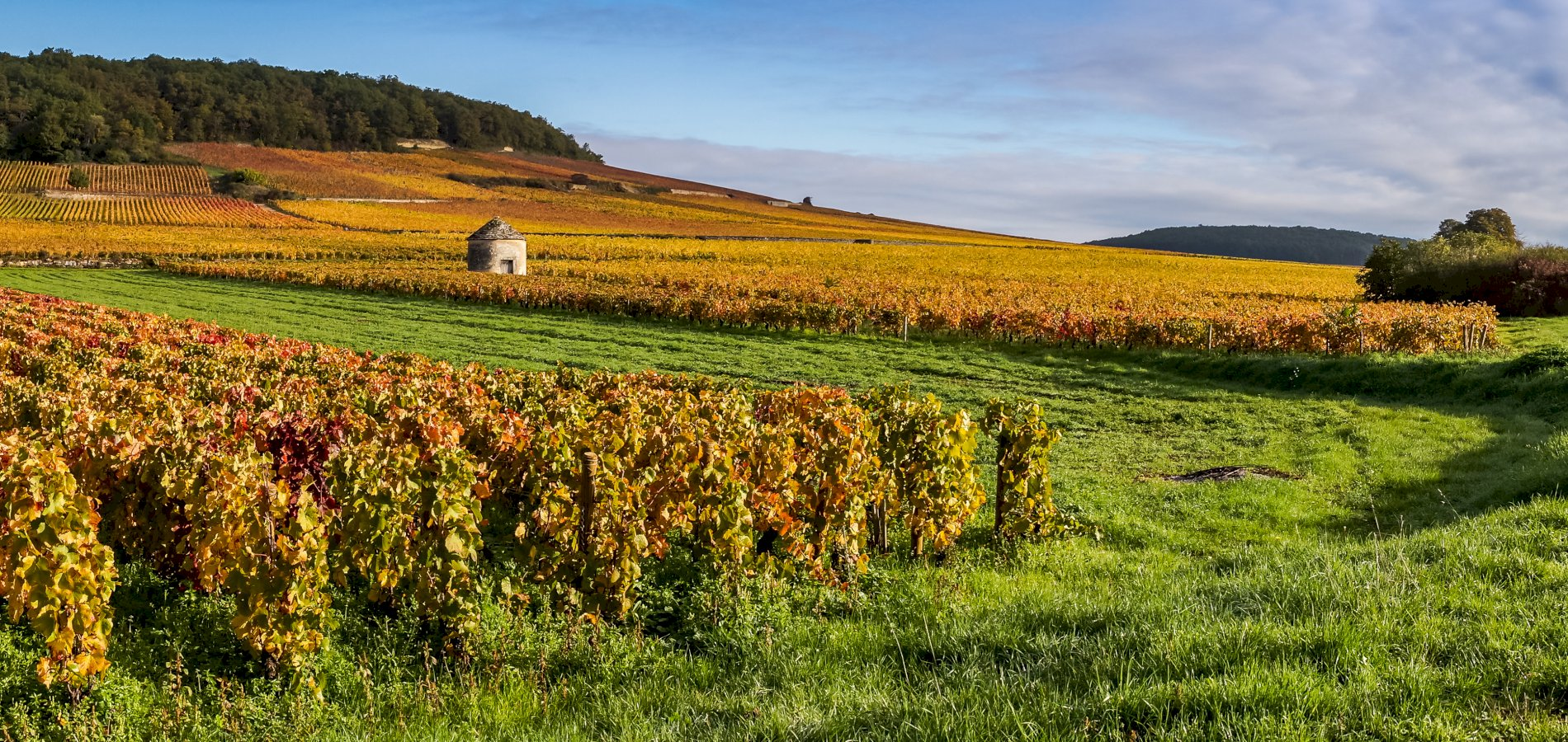 Ophorus Tours - Grands Crus Alsace Wine Tour Private Day Trip From Riquewihr
