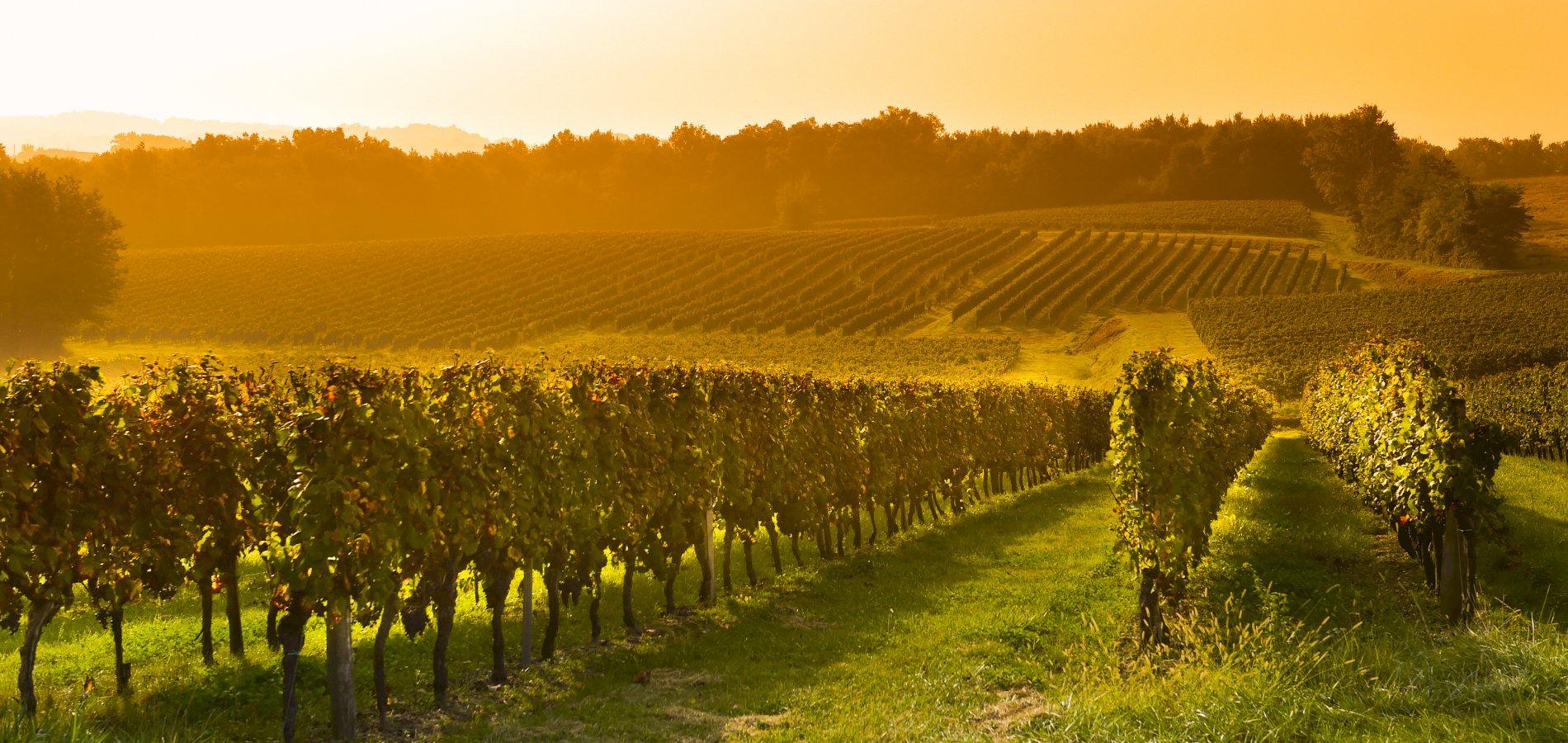 Ophorus Tours - Private Bordeaux Wine Tour to Saint Emilion from Toulouse