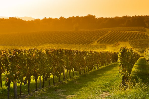 Ophorus Tours - Private Bordeaux Wine Tour to Saint Emilion from Toulouse