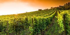 Ophorus Tours - Dordogne Wine Tour Private Day Trip From Trémolat
