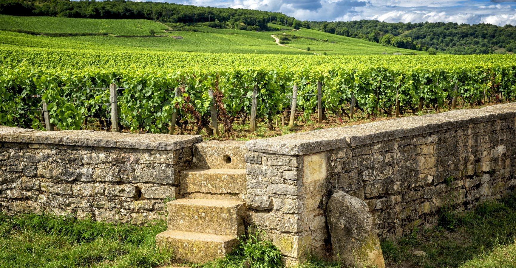 Ophorus Tours - Burgundy Wine Tour Shared Day Trip from Dijon