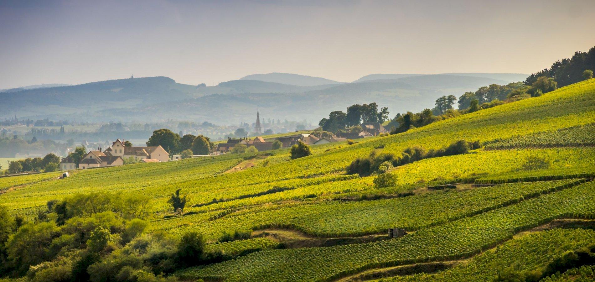 Ophorus Tours - Burgundy Wine Tour Shared half day Trip from Dijon