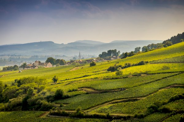 Ophorus Tours - Burgundy Wine Tour Shared half day Trip from Dijon
