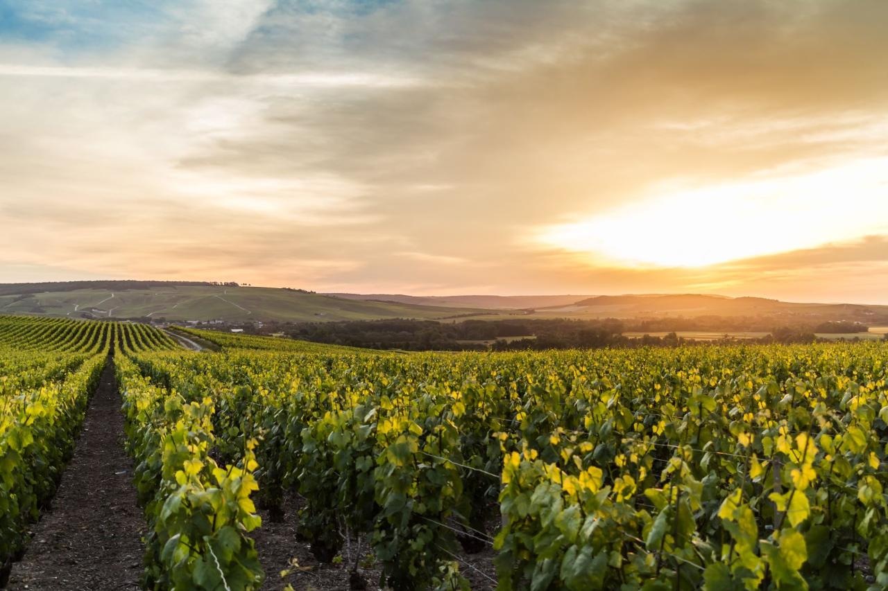 Ophorus Tours - Champagne Wine Tour Shared Half Day Trip from Reims