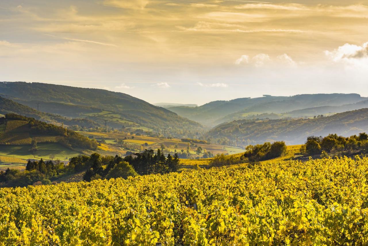 Ophorus Tours - 4 Days Burgundy Wine Tour Private Travel Package - Dijon - 3* Hotel Option
