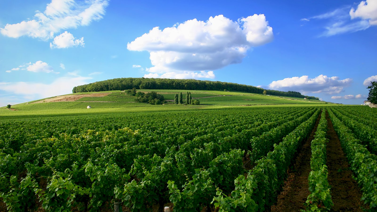 Ophorus Tours - Côte De Nuits Burgundy Wine Tour Private Day Trip From Beaune