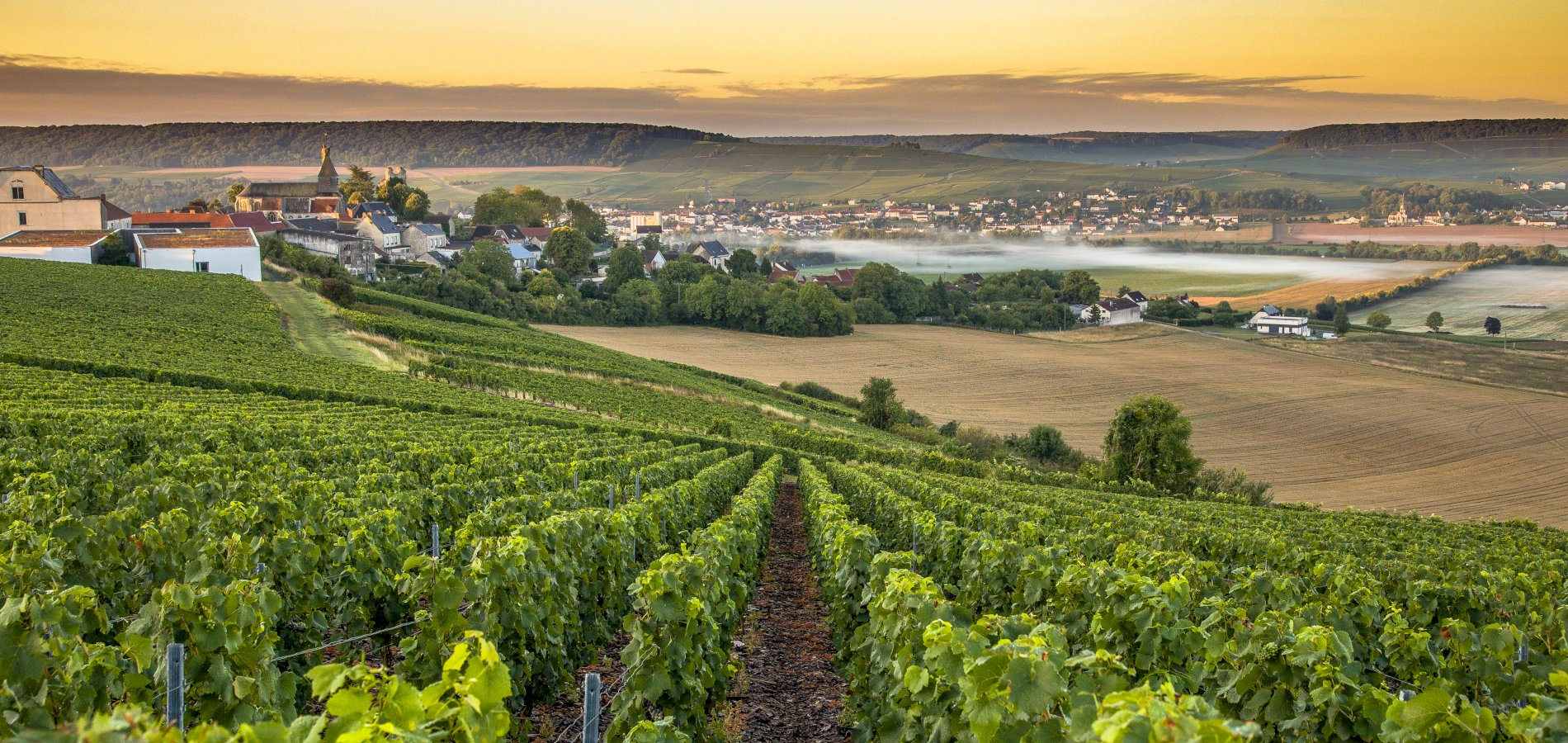 Ophorus Tours - Champagne Private Full Day Trip From Paris