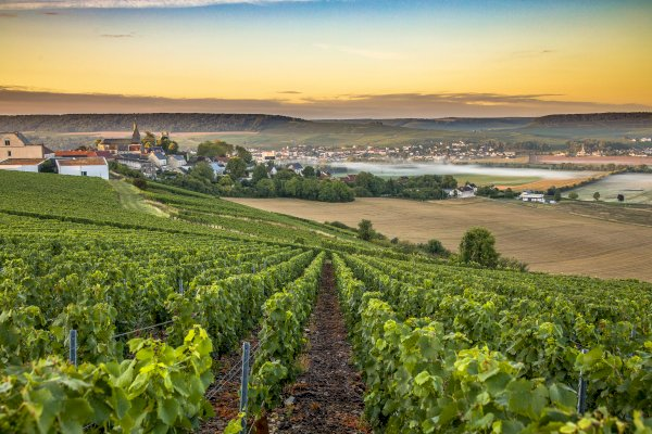 Ophorus Tours - Champagne Wine Tour Private Full Day Trip From Paris