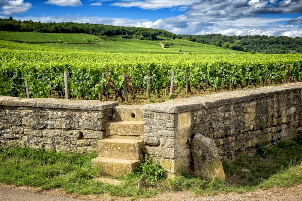 Ophorus Tours - 8 Days Alsace & Burgundy Small Group Private Travel Package - 3* Hotel Option